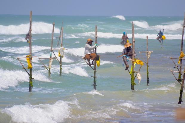 Stelzenfischer Sri Lanka
