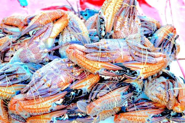 unawatuna-fischmarkt